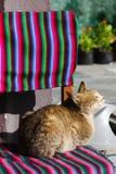 Sunbathing cat Stock Image