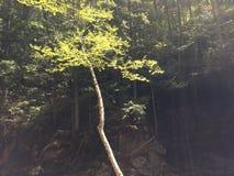 Sunbathing drzewo Zdjęcia Royalty Free