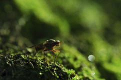Sunbathing. Fly sits on moss and bath in rays of sun Stock Photography
