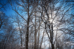 Sunbeam. Sun rays coming through the blowing snow around tangled trees branches against the blue sky Stock Photography