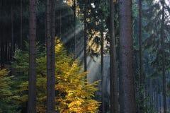 sunbeam royaltyfri fotografi