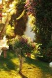 Sunbeam Стоковое Фото