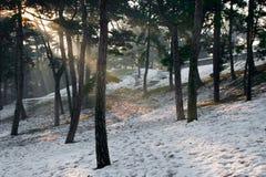Sunbeam Photographie stock libre de droits