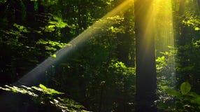 Sunbeam obrazy stock
