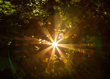 sunbeam royalty-vrije stock foto