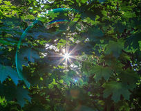 sunbeam royalty-vrije stock foto's