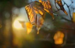 sunbeam royalty-vrije stock fotografie