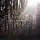 sunbeam fotografia stock libera da diritti