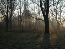 Foggy forest. Morningwith frost on grass stock photos