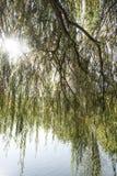 Sunbeam behind tree against lake Royalty Free Stock Photos