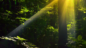 Sunbeam Stock Images