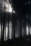 Sunbeam in dark forest Royalty Free Stock Images