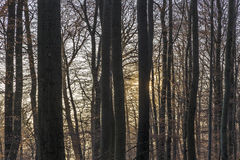 Sunbeam in dense wild forest. Gives a scenic romantic background Royalty Free Stock Photo