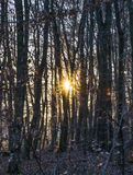 Sunbeam in dense wild forest. Gives a scenic romantic background Stock Photos