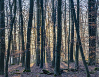 Sunbeam in dense wild forest. Gives a scenic romantic background Royalty Free Stock Photography