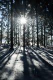 Sunbeam in einem Winter-Wald Lizenzfreie Stockfotos