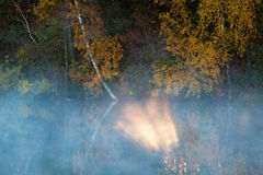 Sunbeam. The fog at the forest lake royalty free stock photography