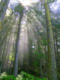 Sunbeam Forest. Sunbeams, shafts of light shine through the rainforest Stock Image