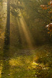 Sunbeam in a forest Stock Photos