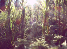 Sunbeam in forest. Bright Sunbeam in green forest Stock Photo