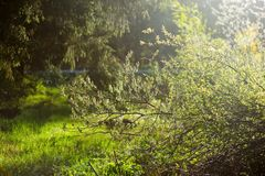 Sunbeam in green forest Royalty Free Stock Image