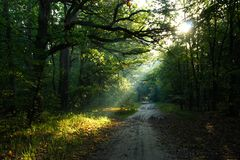 Sunbeam in green forest Royalty Free Stock Photography