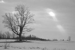 Sunbeam on a grey day in the coutryside bw. A single maple tree is silhouetted on a grey overcast winter day with a break in the clouds and a single shaft of Royalty Free Stock Images