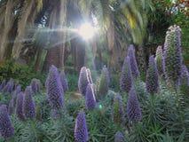 Sunbeam i skogen royaltyfria foton