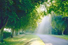 Sunbeam's through tree's. Sunbeam lighting up the mist through the foliage of an avenue of beech trees early morning between Sandringham and Stock Images