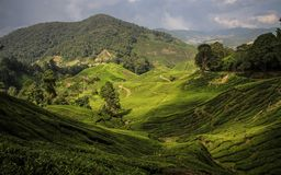 A sunbeam lights up the cameron Highlands near Brinchang, Malaysia. The Cameron Highlands is a highland situated at about 150 kilometers North of Kuala Lumpur royalty free stock photos