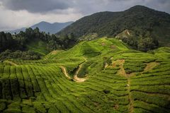 A sunbeam lights up the cameron Highlands near Brinchang, Malaysia. The Cameron Highlands is a highland situated at about 150 kilometers North of Kuala Lumpur stock image