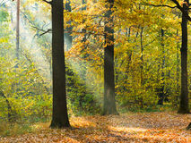 Sunbeam lit lawn in autumn forest Stock Photography