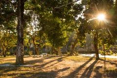 Sunbeam. Path of sunbeam with tree royalty free stock photos