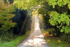 Sunbeam pathway stock images