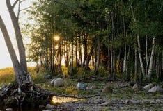 Sunbeam. Penetrates through the trees Stock Photos