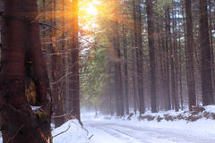Sunbeam przez gałąź Obrazy Royalty Free