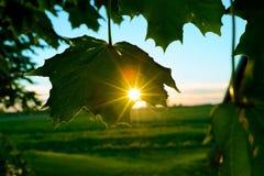 Sunbeam przez naturalnej zieleni Obrazy Royalty Free
