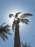 Sunbeam przybycie przez drzewko palmowe liści Obraz Stock