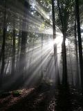 Sunbeam, Rays, Sun, Forest Stock Image