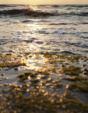 Burning Sunset. Sunbeam's harsh reflection burns the gushing sea as well as an algae covered rock at sunset Royalty Free Stock Image
