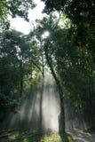 Sunbeam shine through thicket of Tree. Sunbeam at early morning shine through thicket of Tree in Forest.Smoke emphasize Sunbeam Stock Image