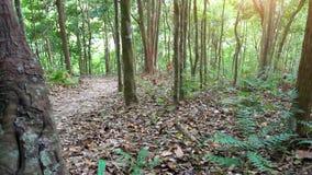 Sunbeam shine thru the tropical green forest. HD. 1920x1080 stock video