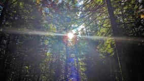 Sunbeam between the trees. Of a forest a beautiful autumn day stock images