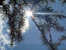 Sunbeam through the trees Royalty Free Stock Images