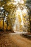 Sunbeam trough the tree Stock Photo