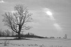 Sunbeam un jour gris dans la guerre biologique de coutryside images libres de droits