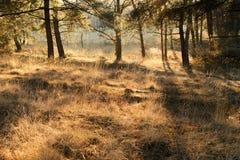 Sunbeam w trawie Zdjęcia Royalty Free