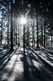 Sunbeam in a Winter Forest Royalty Free Stock Photos