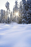 Sunbeam in Winter Forest Stock Photo