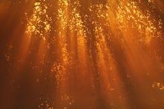 sunbeams осени греют Стоковое Изображение